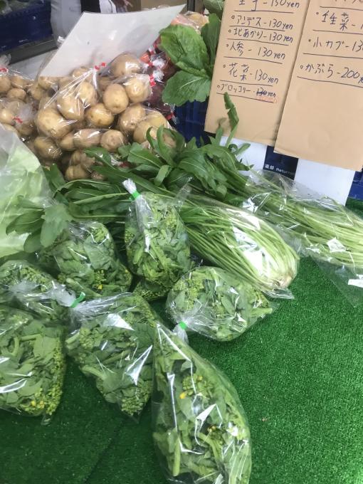 ★タイロン農園★ぐんぐん成長野菜たち【1月…の画像