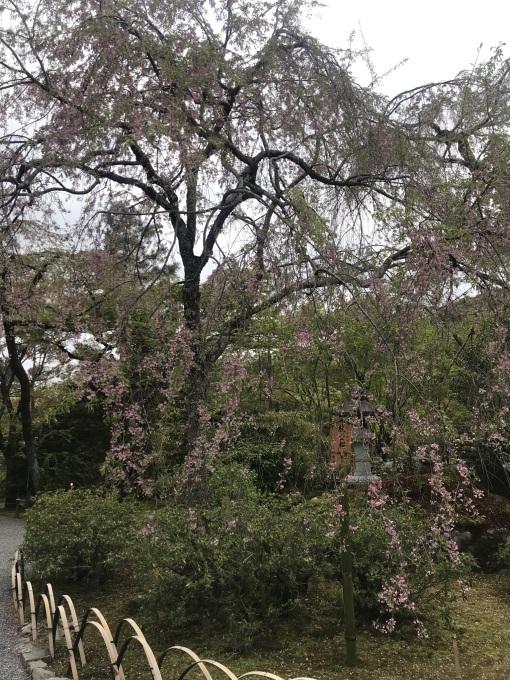 ぼーno日常…春だねーお弁当作りに追われる…の画像